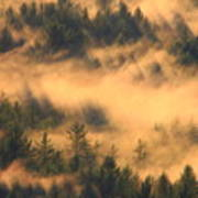 Pine Forest And Fog Art Print
