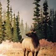 Pine Meadow Elk Art Print