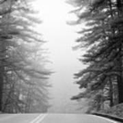 Pine Mist Art Print