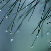 Pine Needle Raindrops Art Print