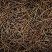 Pine Needles On Forest Floor Art Print