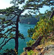 Pine Over The Bay Art Print