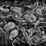 Pine Stump Art Print