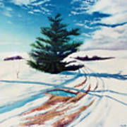 Pine Tree Along The Country Road Art Print