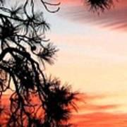 Pine Tree Silhouette Art Print
