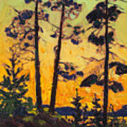 Pine Trees At Sunset Art Print