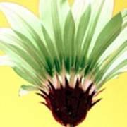 Pineapple Flower Art Print