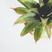 Pineapple Top 2- Art By Linda Woods Art Print