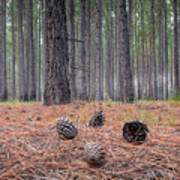 Pines And Needles 4 Art Print