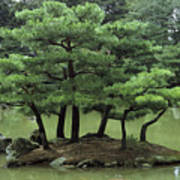 Pines On Island In The Gardens Art Print