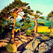 Pines On The Rocks Art Print