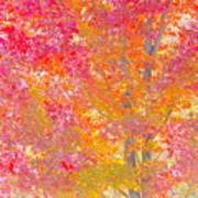 Pink And Orange Autumn Art Print
