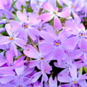 Pink And Purple Spring Art Print