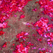 Pink And Red Firecracker Debris Abstract Art Print