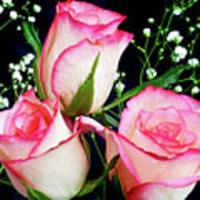 Pink And White Roses Art Print