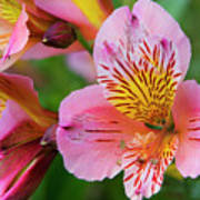 Pink And Yellow Flora Art Print
