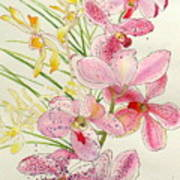 Pink And Yellow Orchids Art Print