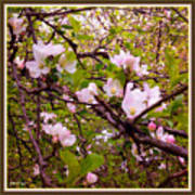 Pink Aplle Blossoms Of Spring Time Art Print