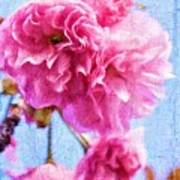 Pink Bellos Art Print
