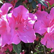 Pink Bevy Of Beauties Art Print