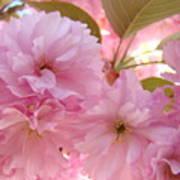 Pink Blossoms Art Prints Spring Tree Blossoms Baslee Troutman Art Print