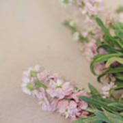 Pink Bunches Art Print