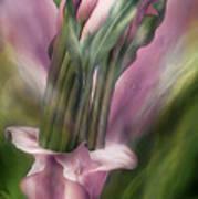 Pink Callas In Calla Vase Art Print