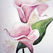 Pink Callas  Art Print