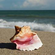 Pink Conch  Art Print