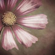 Pink Cosmos Painting Art Print