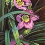 Pink Daylilys Art Print