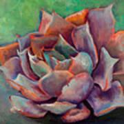 Pink Echeveria Art Print
