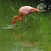 Pink Flamingo Art Print by Cindy Lee Longhini