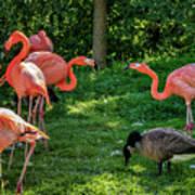 Pink Flamingos And Imposters Art Print