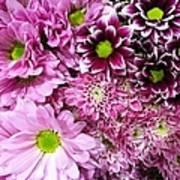 Pink Flower Carpet Art Print