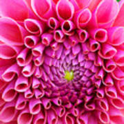 Pink Flower Close Up Art Print
