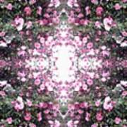 Pink Flower Sky Window Art Print