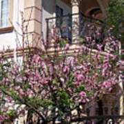 Pink Flower Tree. Elegant Art Print