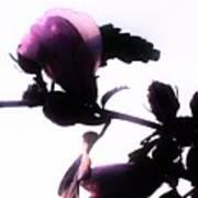 Pink Flowers In Empty Space Art Print