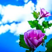 Pink Flowers On A Blue Sky Art Print