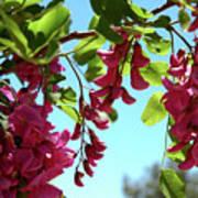 Pink Flowers Virginia City Nv Art Print