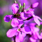 Pink Flowers With Bee . 40d4803 Art Print