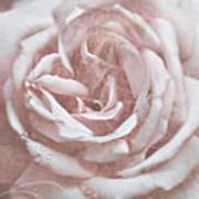 Pink Garden Rose Art Print