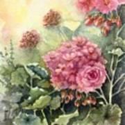 Pink Geranium's  Art Print