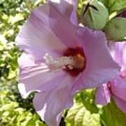 Pink Hawaiian Flowers Art Print