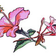 Pink Hibiscus And Geranium  Art Print
