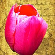 Pink Impression Tulip Art Print