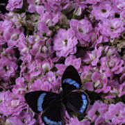 Pink Kalanchoe And Black Butterfly Art Print