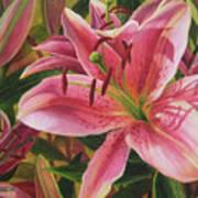 Pink Liliums Art Print