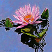 Pink Lily With Dancing Reflections Art Print